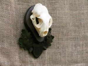 panoplie craniu ras dc9